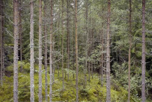 Waldstück bei Husgölen (Schweden). Aufnahme 6x9 Colornegativ Kodak Ektar 100.