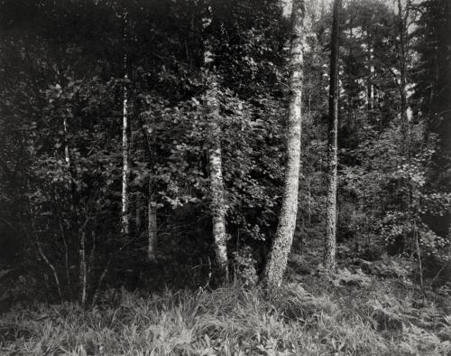 Waldstück bei Perstorp. Schweden. Aufnahme direkt belichtet auf 4x5 Fotopapier. Papernegative.