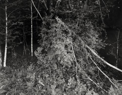 Waldstück bei Risan, Schweden (20.8. 2019)  Aufnahme im Format 4x5 direkt auf Fotopapier belichtet. Kalotypie.