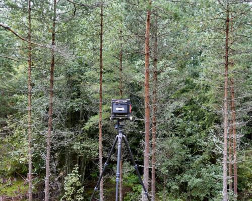 4x5 Kamera bei Husgölen im Wald aufgebaut