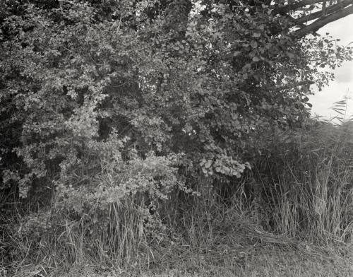 Buschwerk im Jenischpark. Großformat 4x5 analog schwarzweiß.