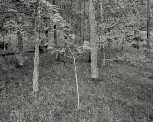Waldstück bei Risatorpet Östra. Belichtung auf 4x5 Fotopapier.