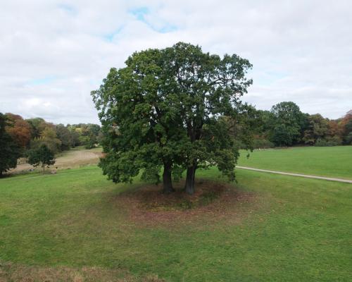 'Mein' Baum im Jenischpark. Mit der Drohne aufgenommen.