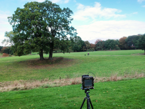 Baum und Kamera im Jenischpark. Aufnahme mit Drohne aus geringer Höhe