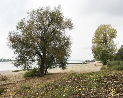 Falkensteiner Ufer an der Elbe frühherbstlich
