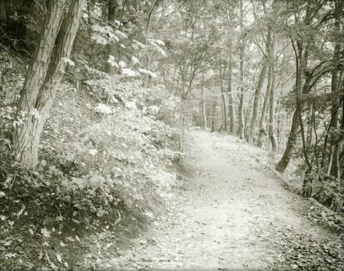 Waldweg Falkenstein herbstlich schwarzweiß