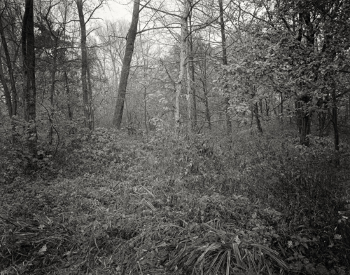 Auwald an der Bilde bei Bergedorf. Aufnahme auf 4x5 Kodak Technical Pan.