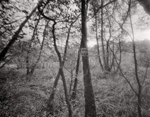 Auwald an der Bille bei Reinbek. Aufnahme auf Kodak Plus-X Pan im 4x5 Großformat