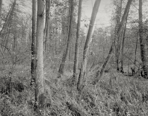 Auwald an der Bille vor Bergedorf. Aufnahme auf Fotopapier im 4x5 Großformat. Papernegative / Calotype