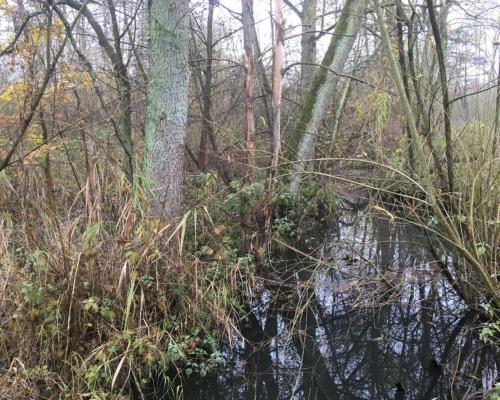 Wassergraben. Auwald an der Bille vor Bergedorf.