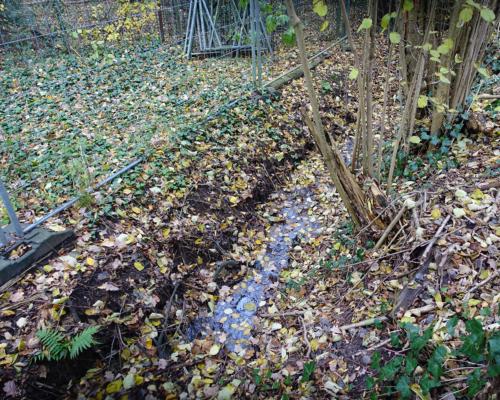 Erste Anzeichen der Osterbek in der Kleingartenanlage Stölpchensee