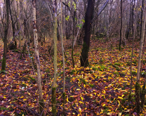 Herbstlaub im schattigen Wald
