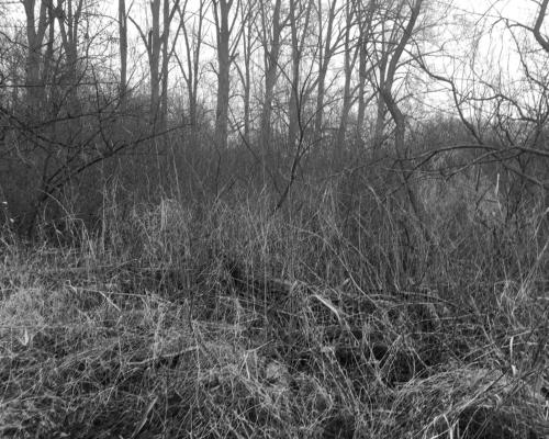 Auwald an der Bille bei Bergedorf