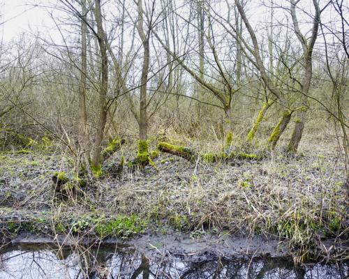Im Auwald an der Bille bei Bergedorf