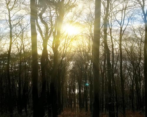 Sonnenschein im Falkensteiner Wald
