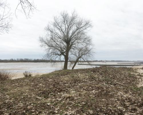 Elbstrand am Falkensteiner Ufer