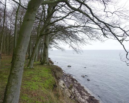Ostsee. Steilküste bei Skjoltrup. Auf der Insel Falster.