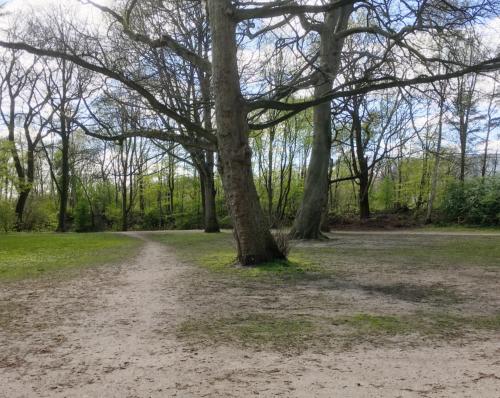 Park an der Lutherkirche in hamburg Bahrenfeld