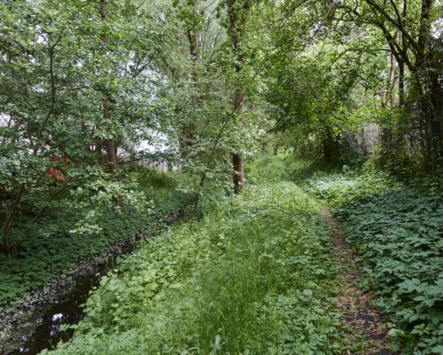 Die Mühlenau in einem grünen Dickicht zwischen Gewerbegrundstücken in Eidelstedt