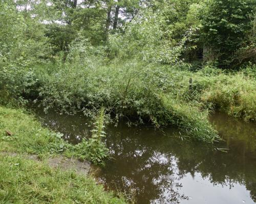 An der Mühlennau bei Eidelstedt