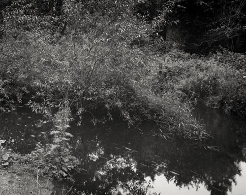 Die Mühlenau bei Eidelstedt. Aufnahme auf Kodak Ektapan im Format 4x5