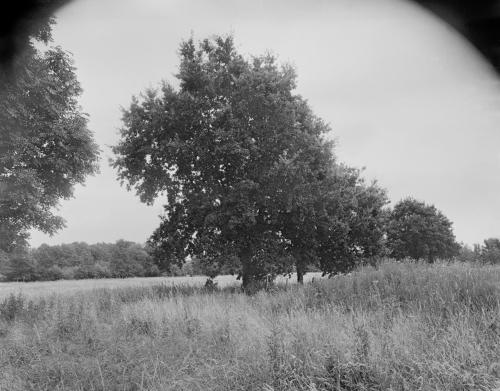 Bäume in der Eidelstedter Feldmark. Aufnahme im analogen Großformat 4x5 in Schwarzweiß