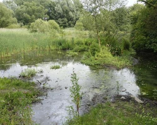 Sumpfgebiet in der Eidelstedter Feldmark