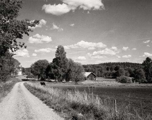 Schwedische Sommerlandschaft bei Karstorp 2020