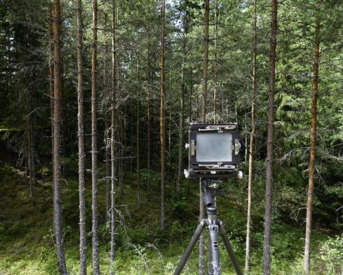 Kamera am Waldrand aufgebaut