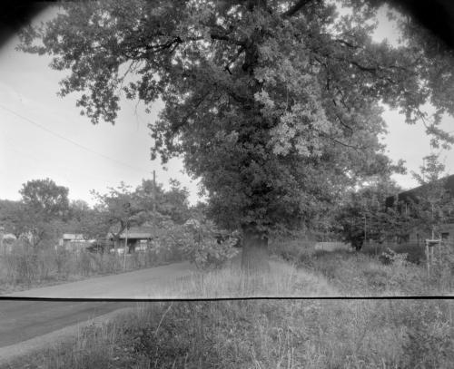 Baum am Vorhornweg in Hamburg Lurup. Bild zusammengesetzt aus 2 Streifen Röntgenfilm.