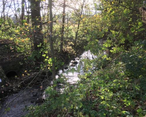 Herbstsonne an der Mühlenau bei Eidelstedt