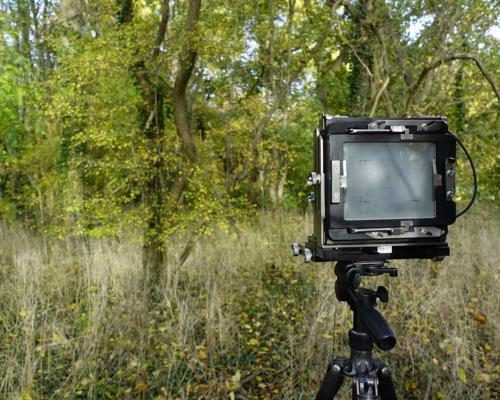 Mit der 4x5 Großformat Kamera im Auwald