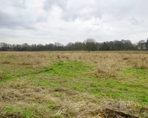 Eidelstedter Feldmark winterlich grau und nass