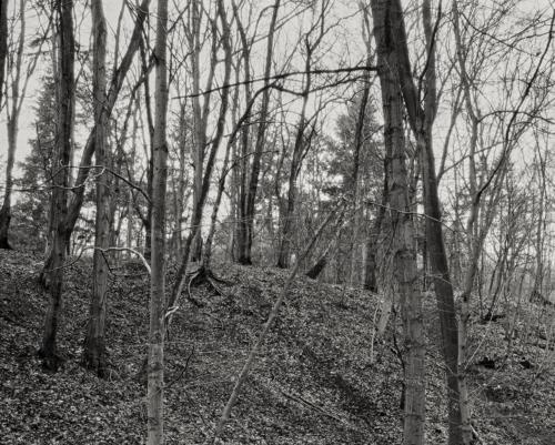 Waldstück im Volkspark Altona. Aufnahme im Format 4x5.