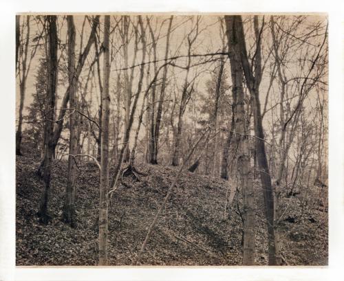 Waldstück im Volkspark Altona. Aufnahme im Format 4x5 mit Hipstamatic nachbearbeitet.
