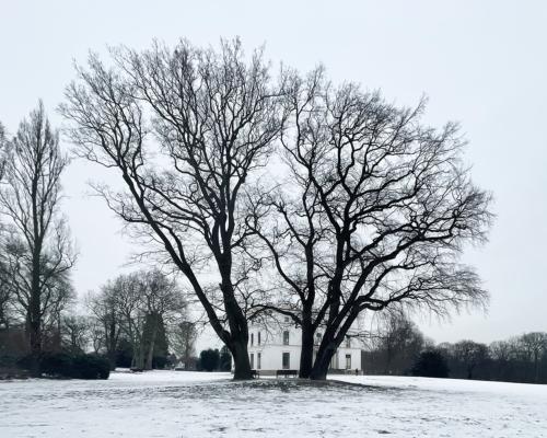 Im Jenischpark mit Schnee. Im Hintergrund das Jenischhaus