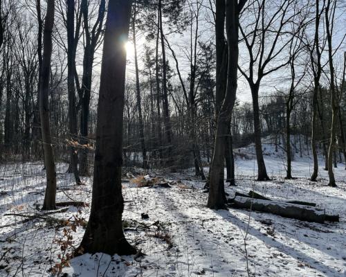 Schneewald im Volkspark Altona