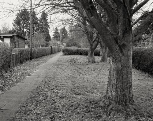 Kleingartengebiet am Holstenkamp in Hamburg Bahrenfeld. Aufnahme im Format 4x5 auf Röntgenfilm.