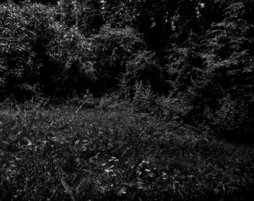 Dunkles Parkgrün am Rande des Weges im Frankfurter Grüneburgpark. Aufnahme im Format 4x5 auf Röntgenfilm.