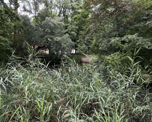 Am Teich. Von-Bernus-Park. Frankfurt Bockenheim