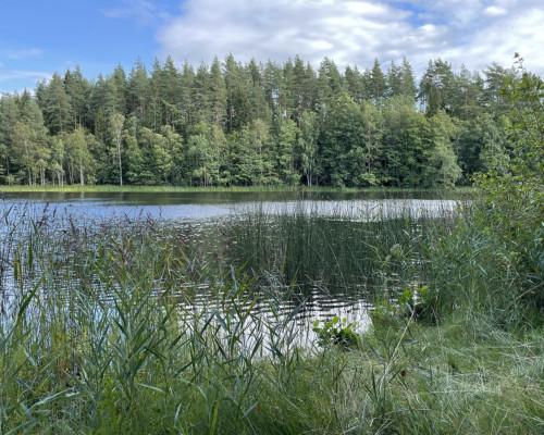 Neu entdeckter Waldsee