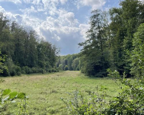 Im Tal der Wetter bei Lich, nahe Kloster Arnsburg