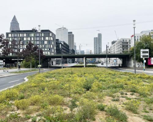 Zwischenbrachstreifen an der Emser Brücke/Europa Allee, Frankfurt Gallus